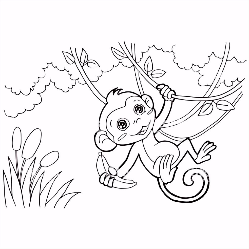 Aap Kleurplaten Cartoon Van De Aap Kleurplaten Paginas Vector Stockvectorkunst En B7rz02dfg1 Dvhhm2ygp5