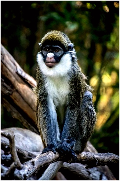 041 1 Monkeys Pinterest