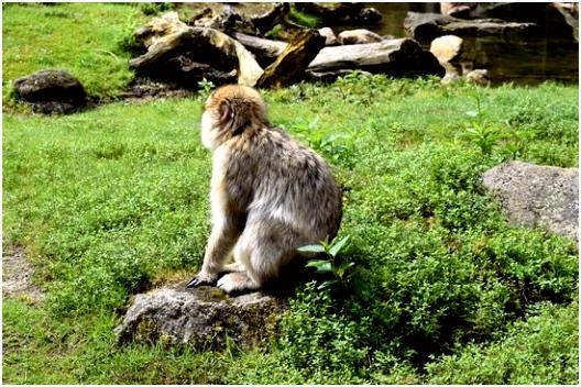 Apenheul Bilde av Apenheul i Apeldoorn TripAdvisor