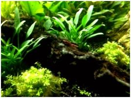 Aquarium garnalen over voeding en schoonmaken lees t hier