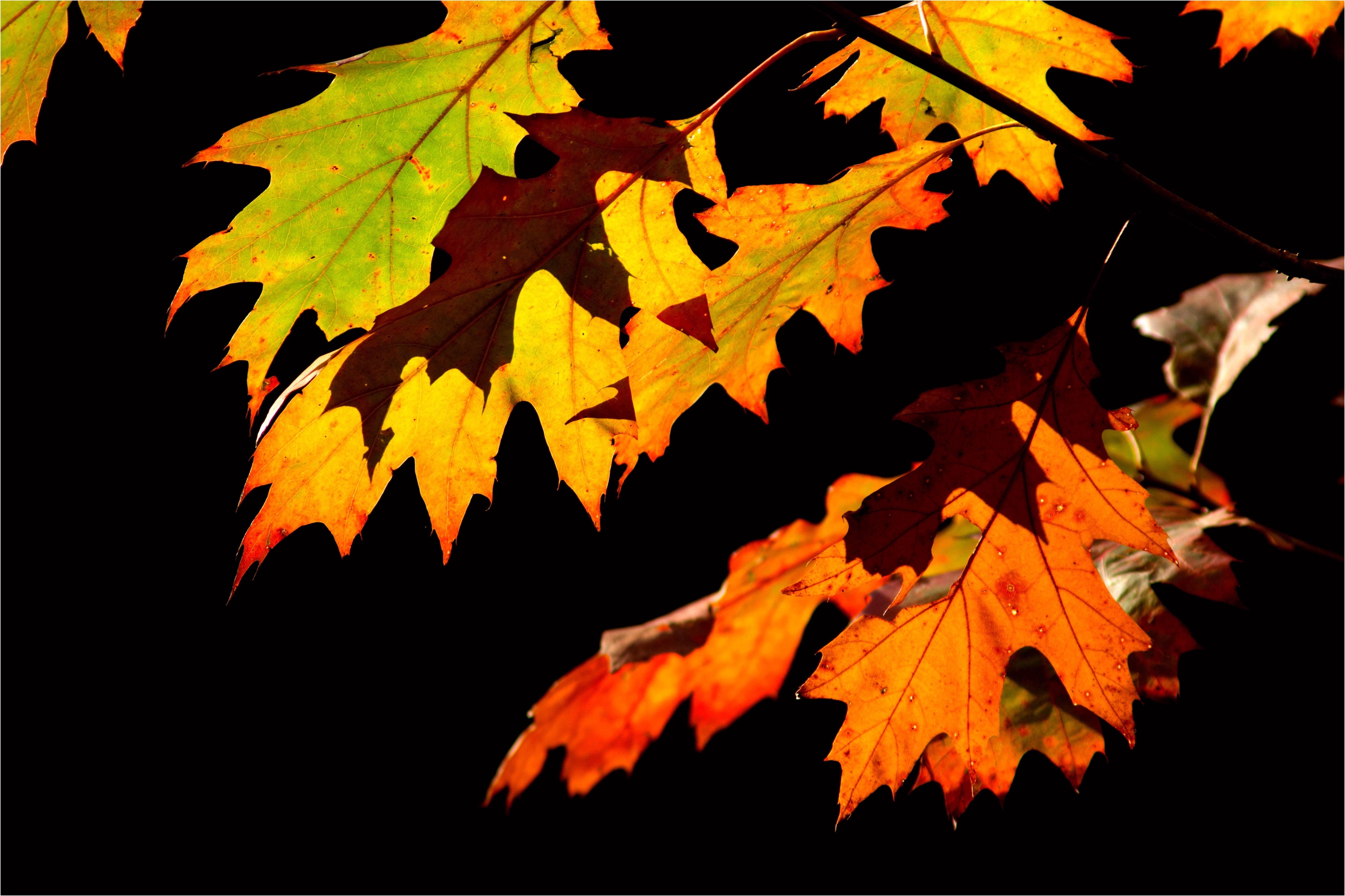 DIY een slinger van herfstbladeren
