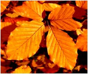Herfstbladeren Crustahobby
