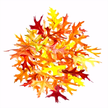 hoop Herfstbladeren — Stockfoto © dibrova