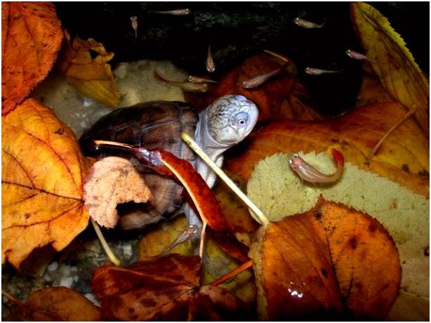 Aquarium Van Herfstbladeren Reptielenforum • toon Onderwerp Bladeren Bodem S7td56rdy8 Ssrz55defu