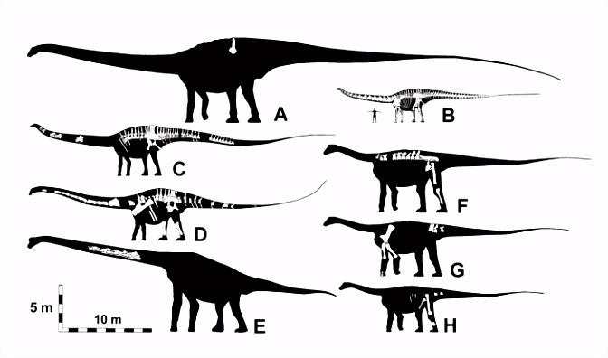 Top 10 Dinosaurussen Met Een Vreemd Uiterlijk Alletop10lijstjes