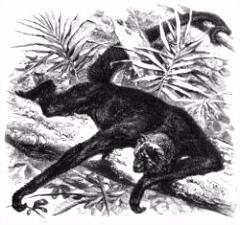 Het Leven der Dieren Zoog ren Eerste Orde Wikisource
