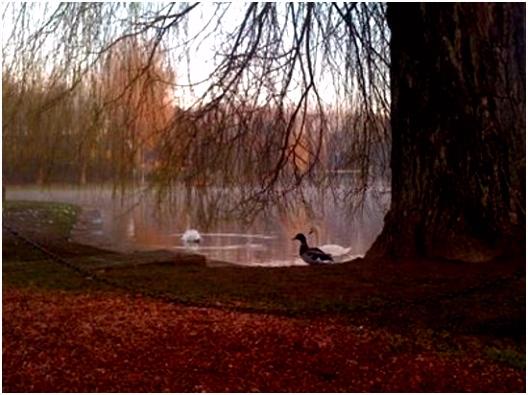 Dieren In De Lente Parc De La Dodaine Nivelles 2018 Alles Wat U Moet Weten Voordat I4eu590av6 U2ndm5uxbu