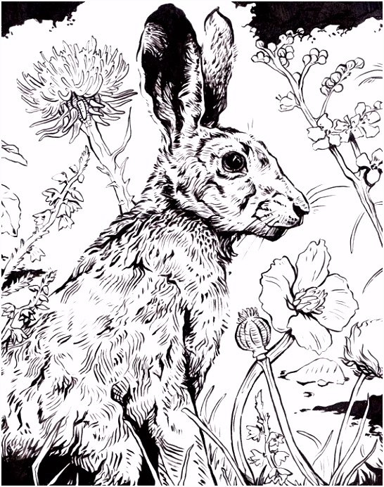 Original Ink Drawing Hare 10X8 RESERVED