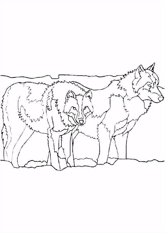 Dieren Kleurplaten Wolf Kleurplaten Uniek Dieren Kleurplaten Wolven – Werkbladen En I7hh73hdm3 Usfe5stkrm
