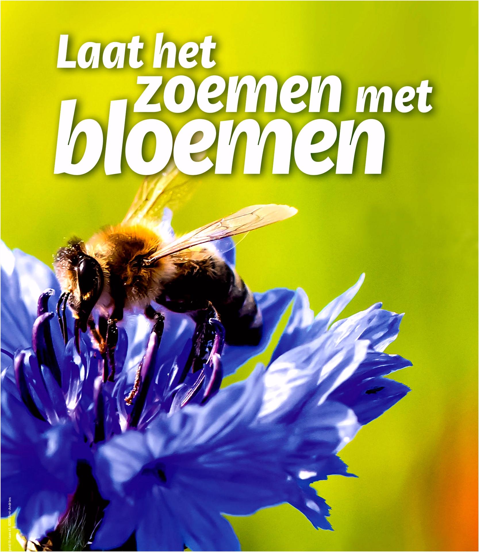 Stadlandschapleieschelde Bloemetjes en bijtjes