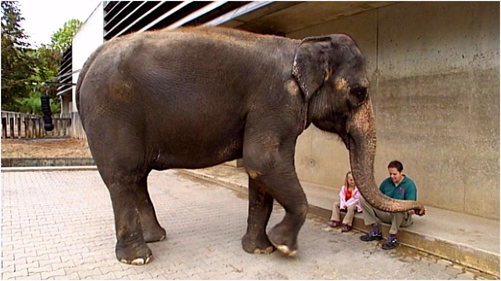 Schooltv De slurf van de olifant Daar kan zij alles mee