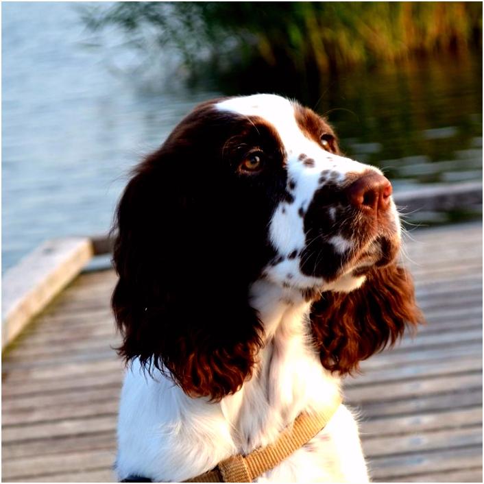 248 best Dog stuff images on Pinterest