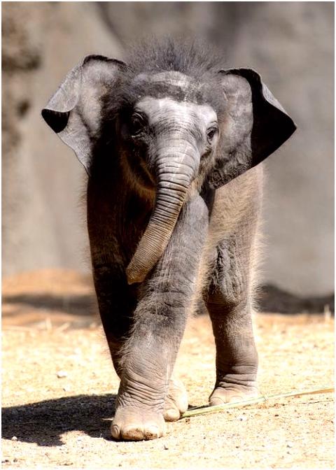 826 best ELEPHANTS images on Pinterest