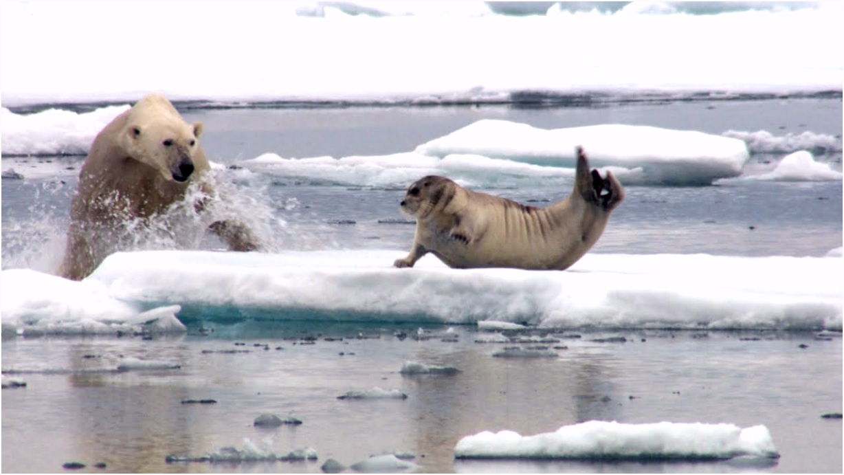 Hungry polar bear surprises a seal The Hunt Episode 2 Preview