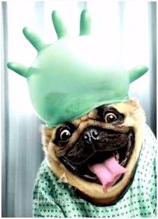 19 beste afbeeldingen van grappige ren Cutest animals Funny