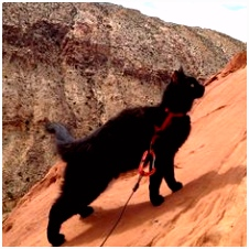 229 beste afbeeldingen van = = Leashed cats Adventure cat 21st