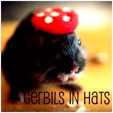 318 best Gerbils images on Pinterest