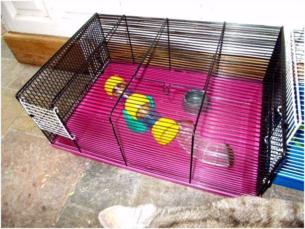 Gerbils Gerbil Local Classifieds Buy and Sell In Middlesbrough O2yd27wdu1 Cvychhffn6