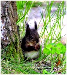 Gesjeesde Eekhoorn 422 Best Squirrel Images On Pinterest In 2018 K5yj93uuy0 Uvra02sko5