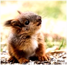 577 best Baby Squirrel images on Pinterest in 2018