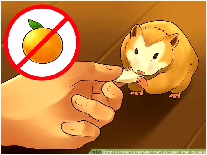 3 Ways to Prevent a Hamster from Escaping from Its Cage