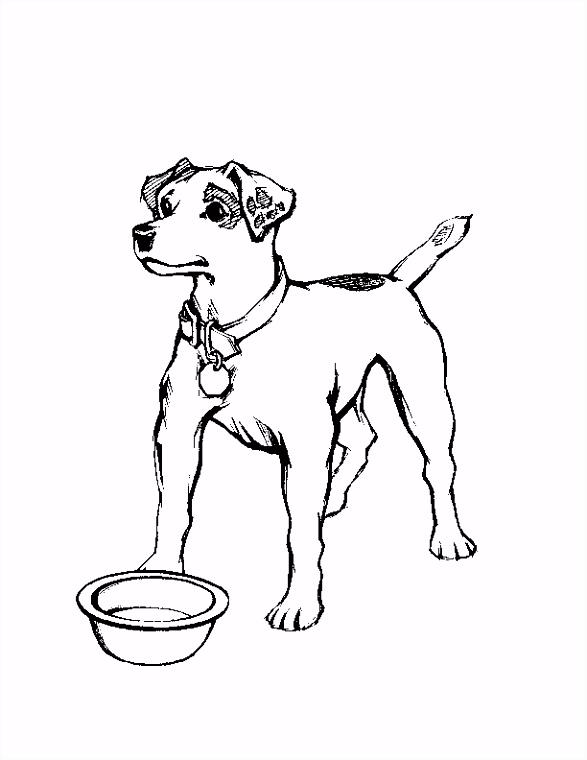 Hond Kleurplaten