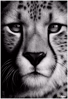 Kleurplaat Cheetah 1000 Best Art Projects Images On Pinterest B5by13sae4 M2bs26otw6