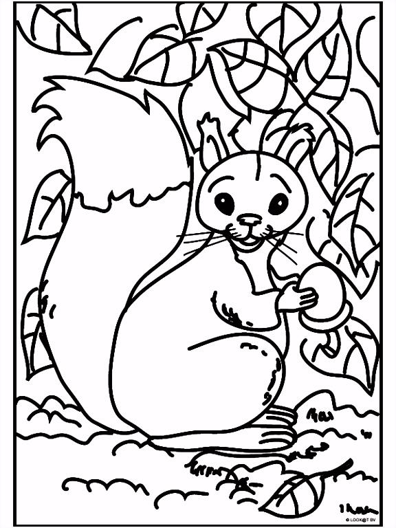 6 kleurplaat eekhoorn sletemplatex1234