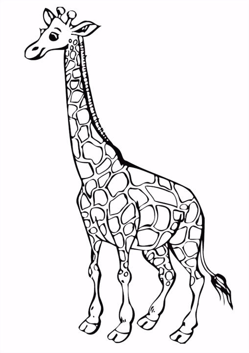 Kleurplaat Giraf Kleurplaat Giraffe Archidev L5eb22flb0 Tsrj2seht5