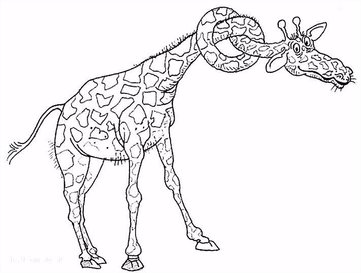 Kleurplaten Van Giraffen ARCHIDEV