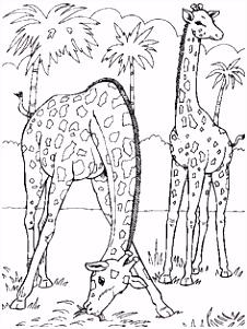 Kleurplaat Giraffe 61 Dintre Cele Mai Bune Imagini Din Jungla Pe Pinterest N 2018 B6cn28jqz6 Bmngh4jwv4