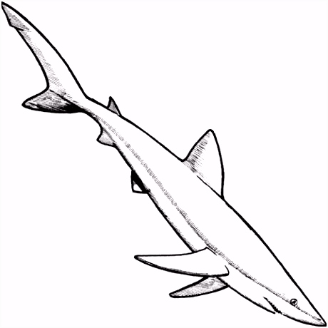 Blauwe haai kleurplaat