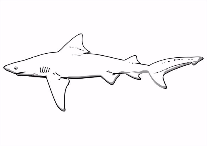 Kleurplaat haai Afb