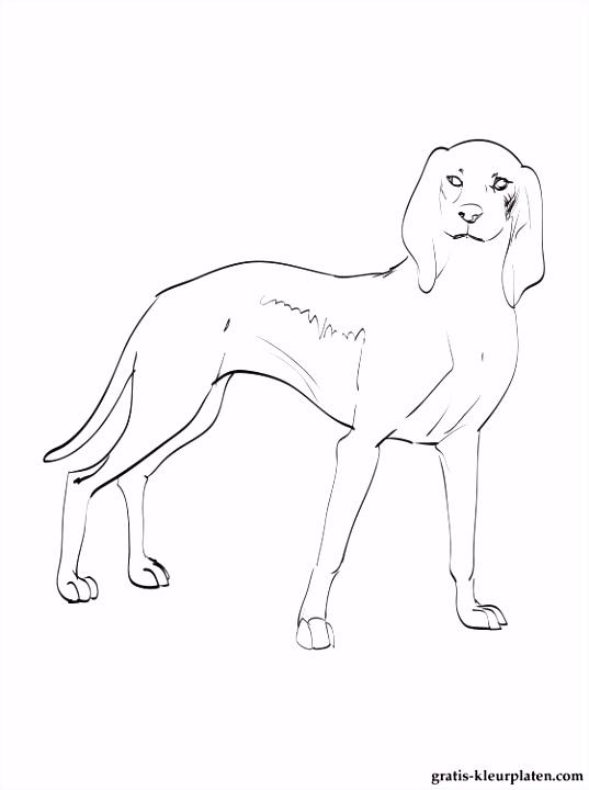 Hond Kleurplaten Fris Kleurplaten Hond Italiaanse – Werkbladen en