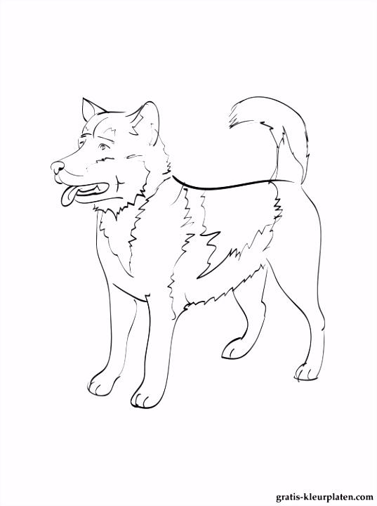 Hond Kleurplaten Nieuw Groenlandse Hond Kleurplaten – Werkbladen en