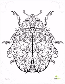 Kleurplaat Insecten the 254 Best Coloring Books Images On Pinterest In 2018 D2en76wct3 A4ykh2kls4