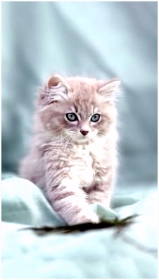 511 best SOFT AS A KITTEN images on Pinterest in 2018