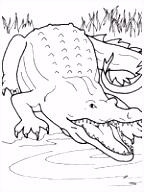 118 beste afbeeldingen van Thema krokodil kleuters Crocodile theme