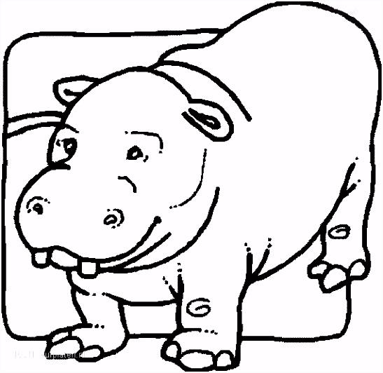 1001 KLEURPLATEN Dieren Nijlpaard Kleurplaat Nijlpaard