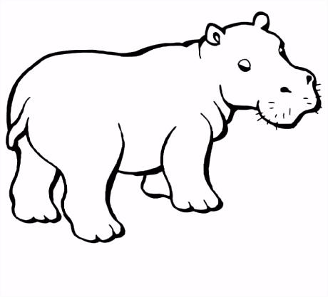Baby nijlpaard kleurplaat