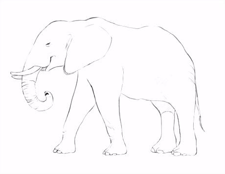 Afrikaanse olifant kleurplaat