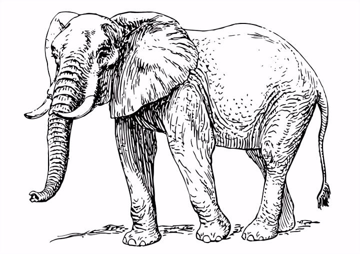 Kleurplaat olifant Afb
