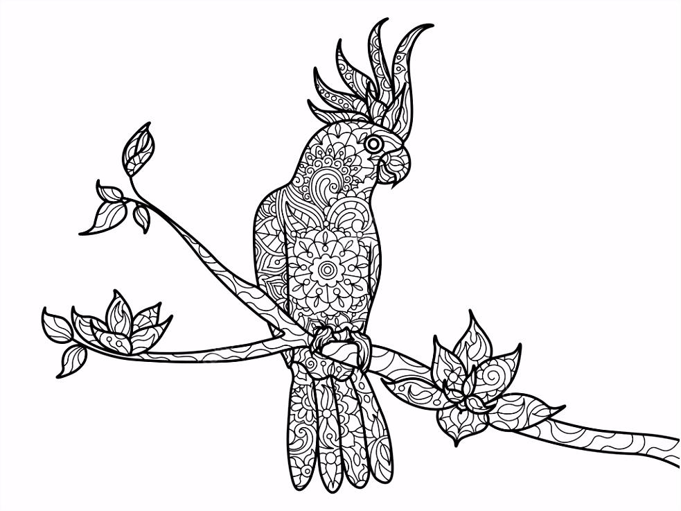 Kaketoe papegaai kleurboek voor volwassenen vector — Stockvector