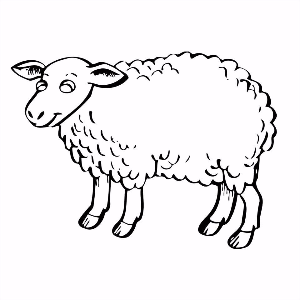 Leuk voor kids – schapen 0001