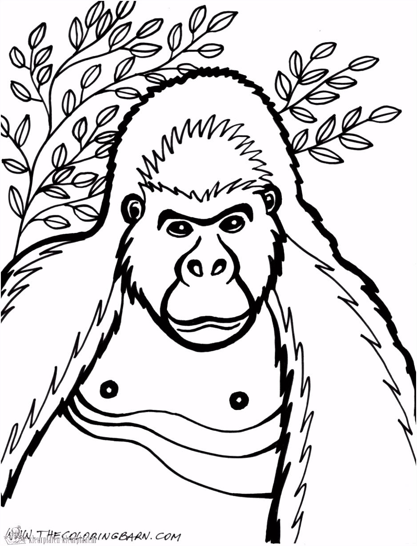 Kleurplaten gorilla