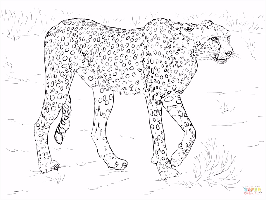44 Best Free Printable Realistic Animal Coloring Pages
