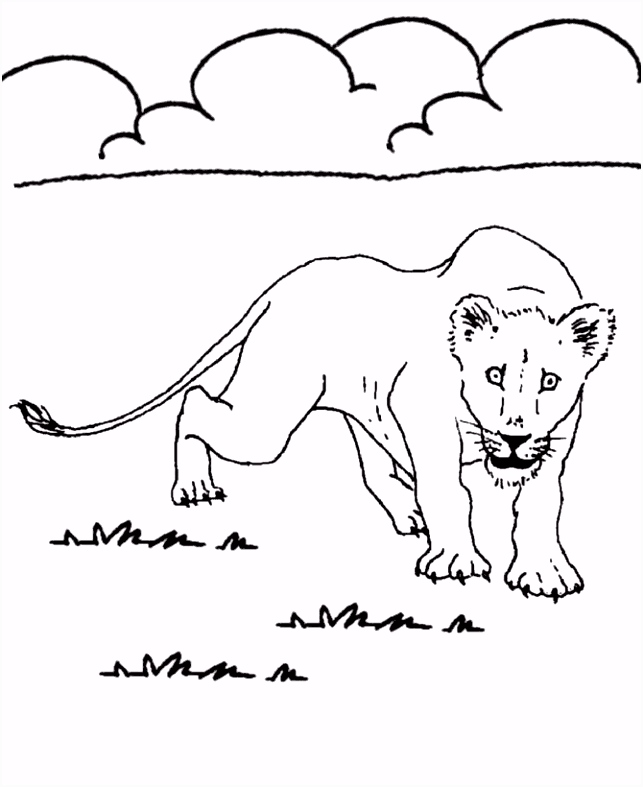 adaswaisu animals pictures for colouring