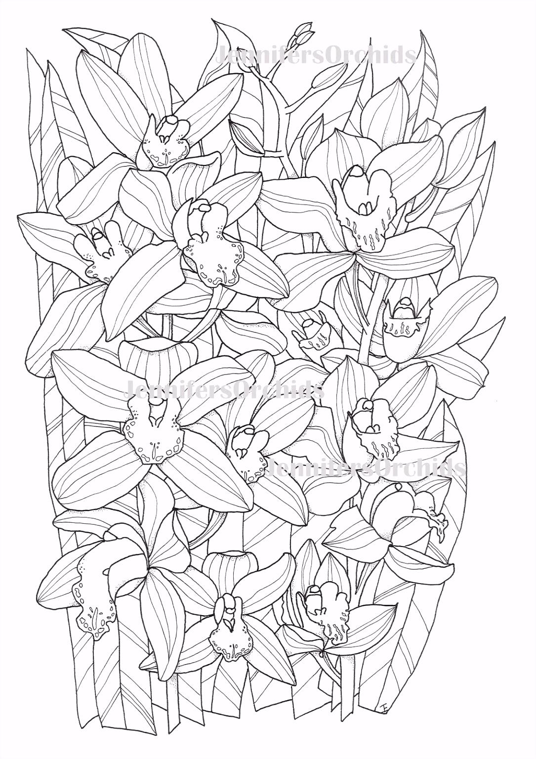 Schilderijen van Orchidee n & andere botanische werken