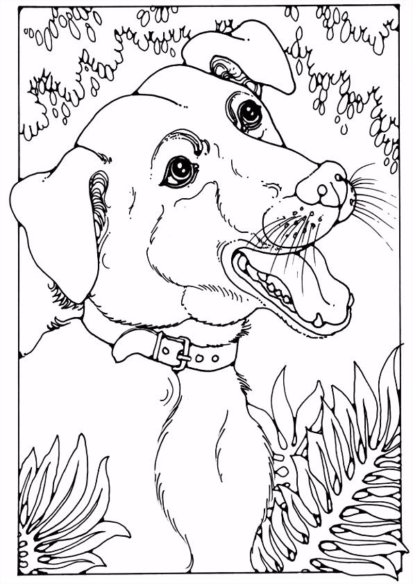 Kleurplaat bastaardhond Afb