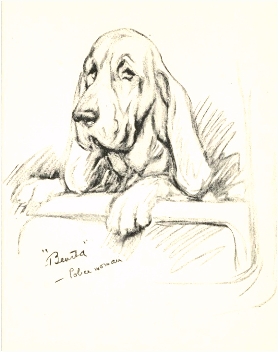 1937 Vintage Dog Print Bloodhound Orig Lucy Dawson Print Custom